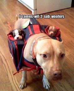 we humans have leash/backpacks for babies.....dogs have these for puppies!! HEHE