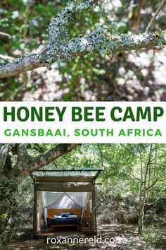 In the indigenous Platbos Forest near Gansbaai in the Overberg you'll find the romantic Honey Bee Camp. Morocco Travel, Africa Travel, Provinces Of South Africa, Wildlife Safari, Cape Town South Africa, Camping Style, Slow Travel, Weekend Getaways, Travel Around