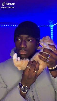 Funny Animal Jokes, Funny Cute Cats, Cute Baby Cats, Cute Little Animals, Cute Funny Animals, Animal Memes, Kittens Cutest, Cute Dogs, Cute Babies