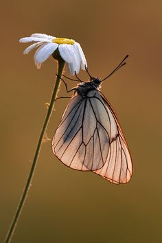 ~~Before Sunrise butterfly by *dralik~~