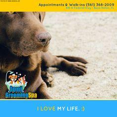 #boca #pet #dog #cat #grooming #care
