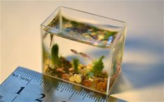 World's smallest aquarium holds just two teaspoons of water  The fish tank contains miniature plants, multicolor stones, and has several miniature zebra danio fish.