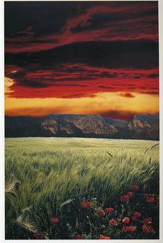 Franco Fontana. Landscapes
