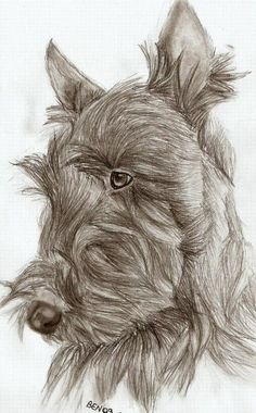 Image Detail for - Scottish Terrier Drawing by Be N - Scottish Terrier Fine Art Prints .