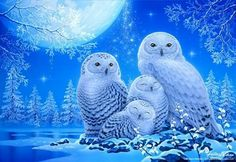 DIY Full diamond painting owl Diamond embroidery on the photo diamond mosaic Cross Stitch home decoration accessories YY Wallpaper Fofos, Owl Wallpaper, Owl Photos, Owl Pictures, Baby Animals, Cute Animals, Owl Artwork, Owl Family, Beautiful Owl