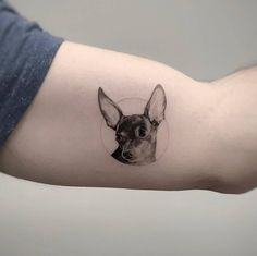 Single needle chihuahua tattoo on the inner arm. Tattoo Set, Piercing Tattoo, Print Tattoos, Piercings, Inner Arm Tattoos, Elbow Tattoos, Small Tattoos, Tattoos For Dog Lovers, Elephant Tattoos