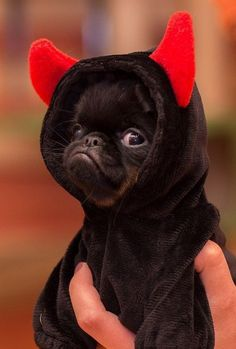 Funny animal pictures of the day – 37 Pics Dogs pug puppies Super Cute Puppies, Baby Animals Super Cute, Cute Baby Dogs, Cute Little Puppies, Cute Dogs And Puppies, Cute Little Animals, Cute Funny Animals, Black Pug Puppies, Puppies Puppies