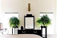 Image result for plant bedroom Bedroom Plants, Image, Plants In Bedroom