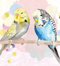 parakeet in watercolor - Google Search