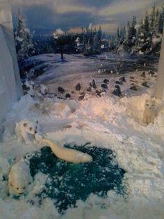 Arctic diorama project