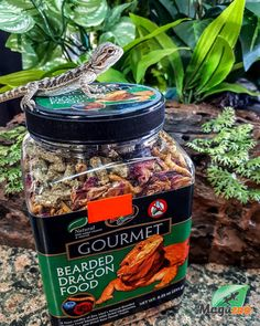 Zoo Med's Gourmet Bearded Dragon Food adds enrichment to your Dragon's diet with the addition of Blueberries, Mealworms, and dried Rose flower petals. Zoo Med has over 30 years of experience researching the nutritional requirements of reptiles and developing foods that meet their needs. This natural food includes essential vitamins and minerals. There are no artificial colors, flavors, or preservatives added. -Zoo Med #MagazooReptiles Bearded Dragon Food, Nutritional Requirements, Reptile Accessories, Vitamins And Minerals, Flower Petals, Blueberries, 30 Years, Reptiles, Preserves