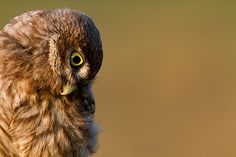 Owl Storytelling: Le Cronache di Civettalandia. Dal 6° International...