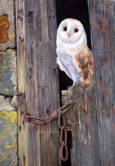 Wildlife - Peter Skillen Pet Portraits