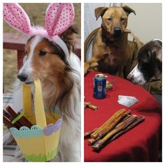 """Our """"Get Creative"""" Winners ARE:     First Place: Shanna Wilkerson & Holly's Easter Bunny Photo!    Second Place: Joanne Lockwood & her dogs playing poker with Bully Sticks!     Congatulations! Shanna & Joanne, please email us at bestbullysticks@gmail.com with you addresses so we can get you those Gift Cards!! Thanks to everyone for their participation!!"""
