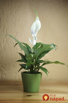 The top 15 plants for removing indoor toxins according to NASA