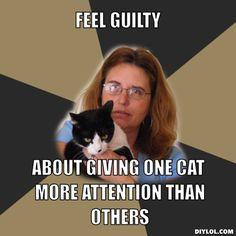 Eharmony cat dating video introduction maker