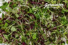 Plants, Edible Flowers, Carnations, Salads, Plant, Planting, Planets