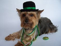 St Patricks Day Dog top hat for x small dog  Crochet by Frillypaws