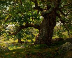 """The Oak,"" Charles Harold Davis, 1903, oil on canvas, 29 x 36"", New Britain Museum of American Art."
