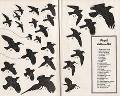 Bird Flight Silhouettes by Calsidyrose, via Flickr