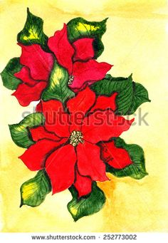 Poinsettia. Hand drawn watercolor painting - stock photo http://submit.shutterstock.com/?ref=1553807