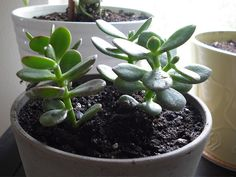 23 ROUGH AND TUMBLE PLANTS FOR THE HOME - http://www.gardenpicsandtips.com/23-rough-and-tumble-plants-for-the-home/