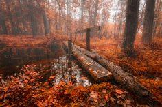 Autumn bridge__Finland by Tuomo Arovainio on Tree Mushrooms, Photos Of The Week, Outdoor Activities, Daydream, Travel Photos, Woodland, Autumn, Fall, Country Roads