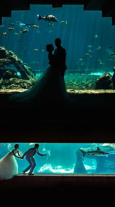 Have a beautiful underwater wedding at Atlantis Hotels in the Bahamas