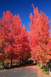 Leaves in Sacramento