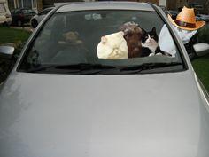 Car Ride Wiv Molly 03 09 2015