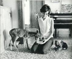 audrey with her pet deer