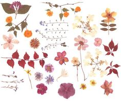 On the blog: The Language of Flowers #genuinelyyou #mygenue #patterndesign #patternisbest #print #design #floral #flowers #spring https://mygenue.com/the-language-of-flowers/