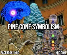 by Carl Weiseth Conifer Pine Trees are one of the most ancient plant genera on the planet, having existed nearly three times longer than all flowering plant species. The Pinecone is the evolutionary precursor to the flower, and its spines spiral in a perfect Fibonacci sequence in either direction, much like the Sacred Geometry of …