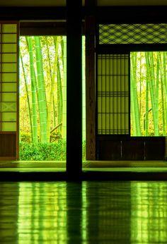 久しく見れなかった緑の世界  今日ふと古民家を覗いたら  竹林と若葉とやわらかな陽で  ほら♫♪♫♪  古民家で春をみつけました^^