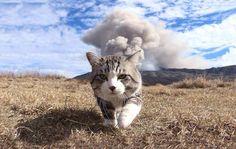 Nyankichi le chat le plus photogénique du monde? - https://www.2tout2rien.fr/nyankichi-le-chat-le-plus-photogenique-du-monde/