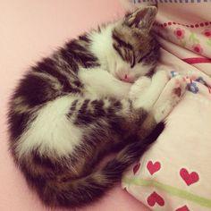 Love Mavi #sweet #kitten