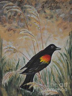 "http://sallytiskarice.com/STR/Welcome.html Red Winged Blackbird 12"" x 16"" Acrylic on canvas panel. Estate frame, light color antiqued finish. $350.00"