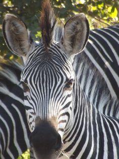 Safari Mfuwe Lodge Zambia