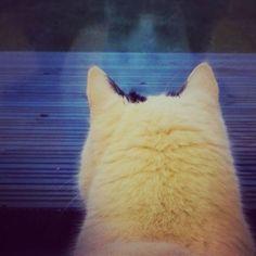 Ulos kaihoava #Niilo #instacat #cat #kotikissa #peilikuvaikkunassa