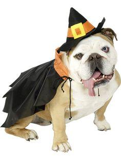 disfraz-perro-bruja