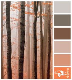 Forest Mist: Brown, Beige, Sand, Grey, Peach - Designcat Colour Inspiration Pallet