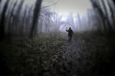haunted-forest.jpg (480×320)