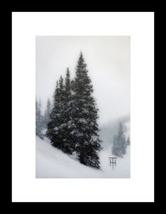 Original Art - Mountain Spruce VI by Terri Heinrichs Art.  Etsy & Daily Paintworks $125  Layers of charcoal, pastel & graphite on transparent mylar.