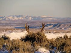 How To Get Started With Salt Water Fishing Mule Deer Buck, Mule Deer Hunting, Hunting Art, Hunting Stuff, Deer Photos, Deer Pictures, Deer Pics, Animal Pictures, Hunting Pictures