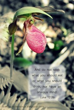 Little Birdie Blessings: lady slipper photo with Luke 12:29.  And do not seek what you should eat or what you should drink, nor have an anxious mind.