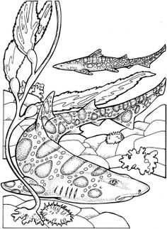 Leopard Sharks Coloring Page From Category Select 27237 Printable Crafts Of Cartoons Nature Animals Bible And Many More