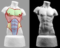 Very good reference for drawing male anatomy and shading points!