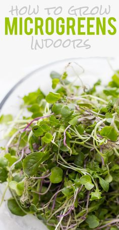 How to Grow Microgreens Indoors