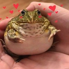 Animals And Pets, Baby Animals, Funny Animals, Frog Pictures, Frog Pics, Cute Reptiles, Frog Art, Cute Frogs, Frog And Toad