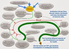 Health in Diagrams I — Gut Flora and Diet